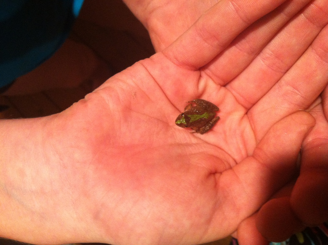 Picture of small frog in hand.