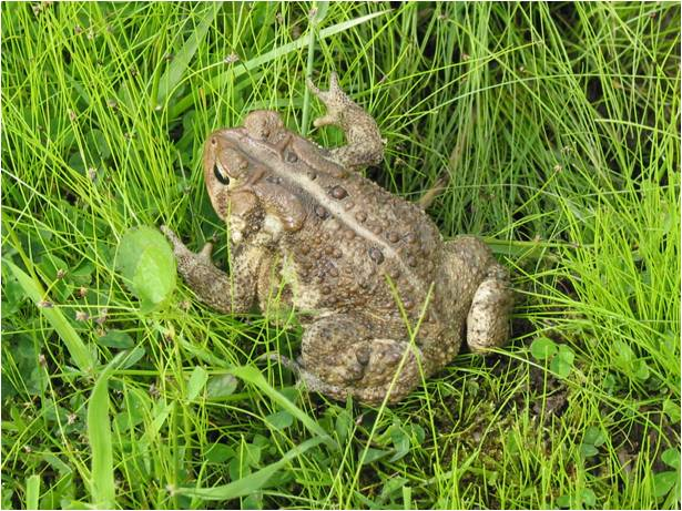 Picture of toad.