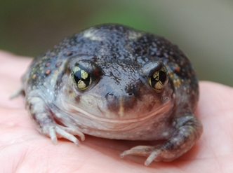Picture of frog.