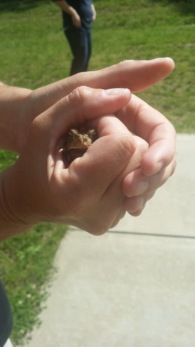 Picture of toad in hand.